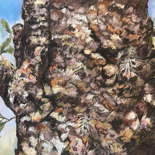 Flora/Fauna - Commended - Annies Slade - Bubblegum Banksia