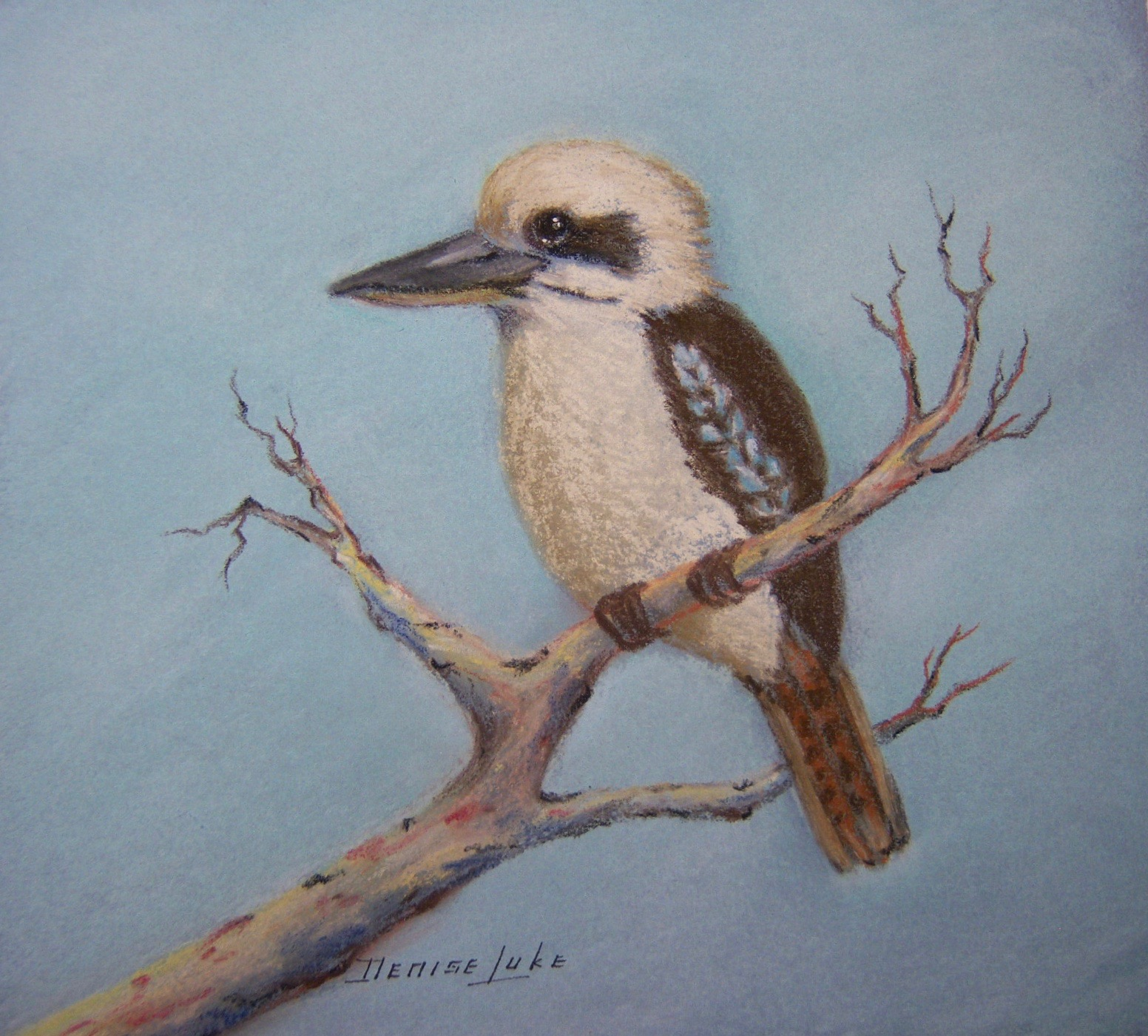 LAUGHING KOOKABURRA - 25cm x 25cm - framed