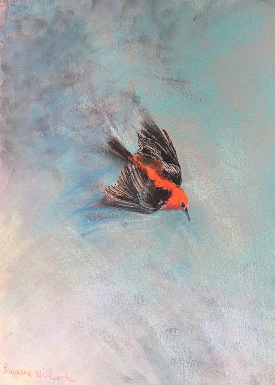 Red Honey Eater 60cm x 45cm