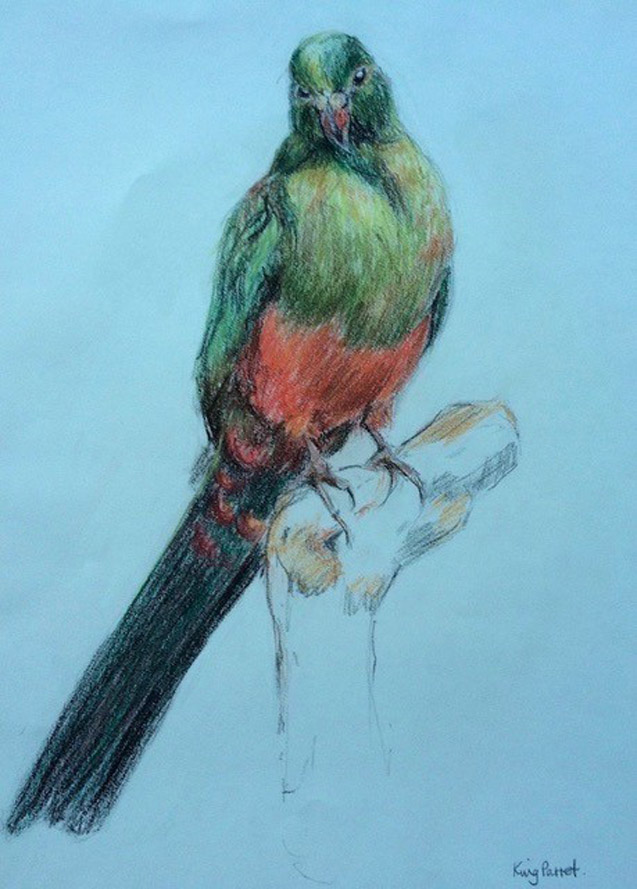My Friend the King Parrot - 42cm x 29cm