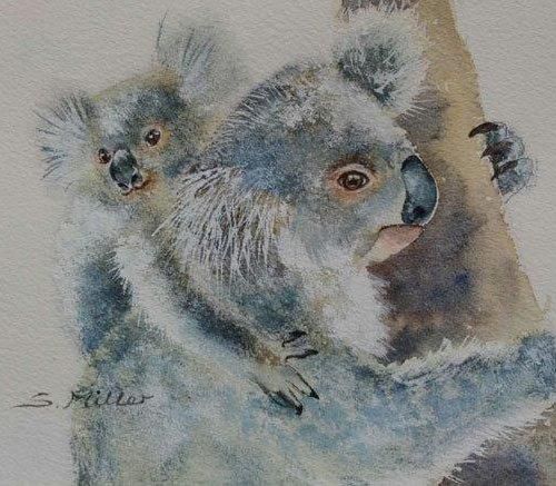 Koala Cuddle
