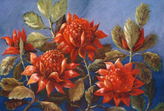 Wonderful Waratahs